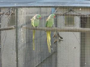 cage ni pour une perruche
